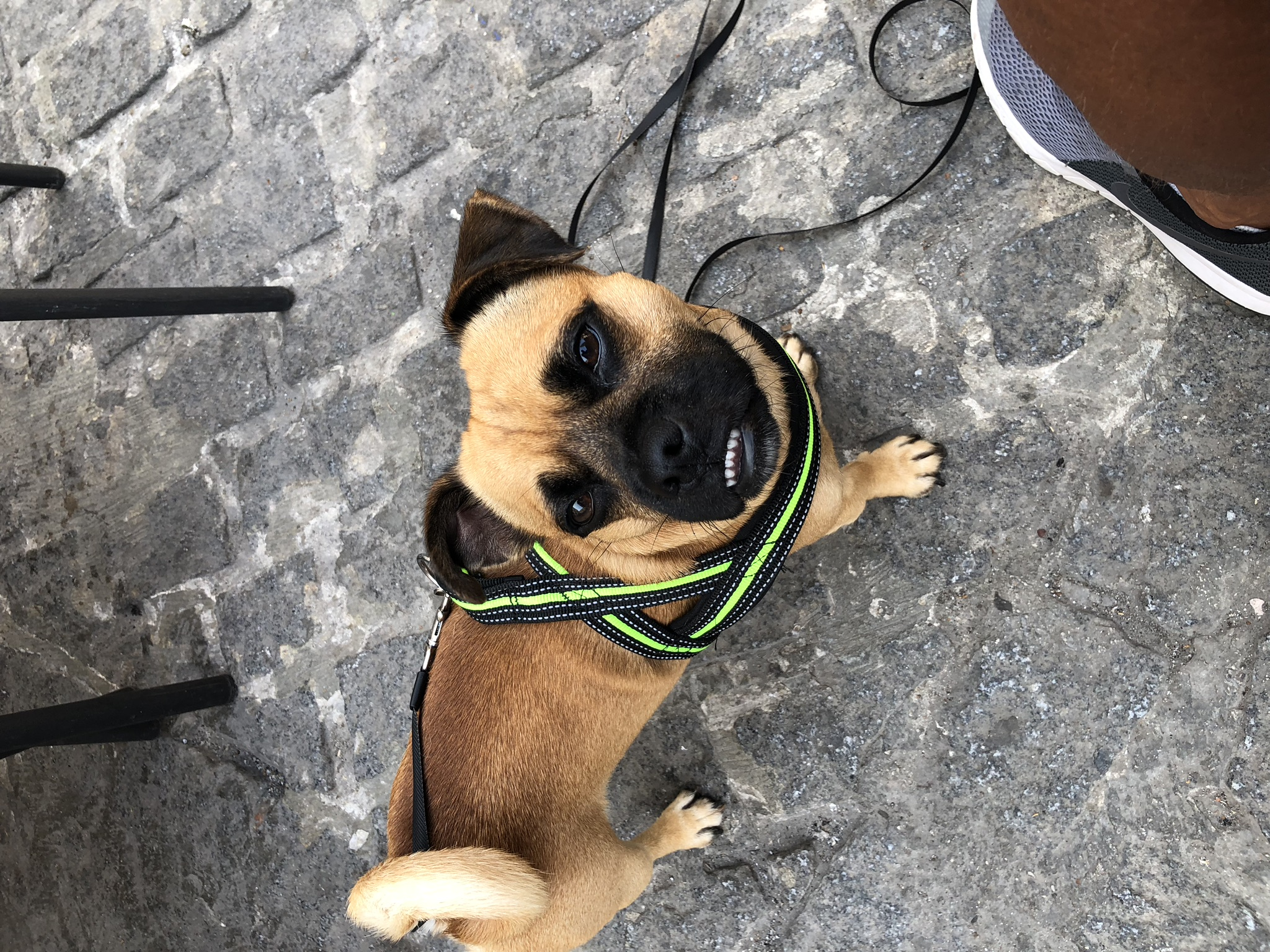 House and Pet Sitter Spain in Denia: address, telephone