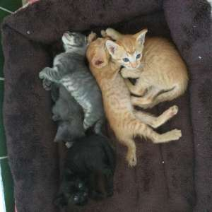 Domestic kittens looking to rehome
