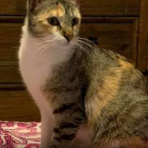 Lost: Lovely cat,