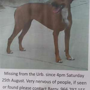 Missing La Marina saturday 25th August