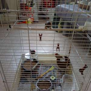 For sale: 3 Zebra Finches & cage - €45